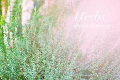 My mother's balcony - herbs