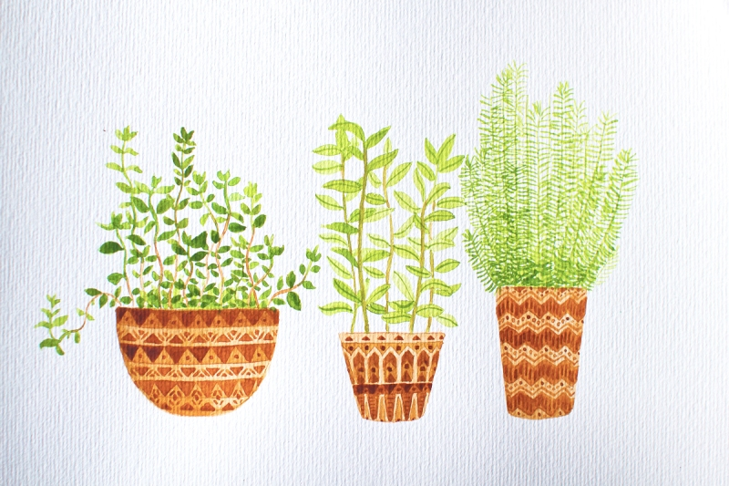 plants watercolour 02