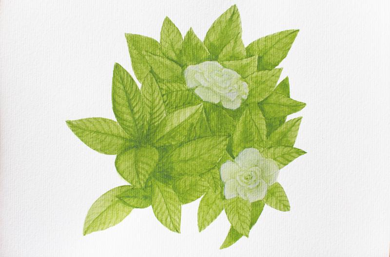 gardenias-5